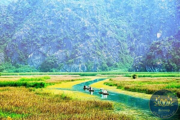 Tranh phong cảnh với chủ đề đồng quê, con trâu, cánh cò trắng, cây đa đầu làng,....