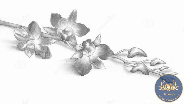 Tranh đen trắng nghệ thuật các loài hoa