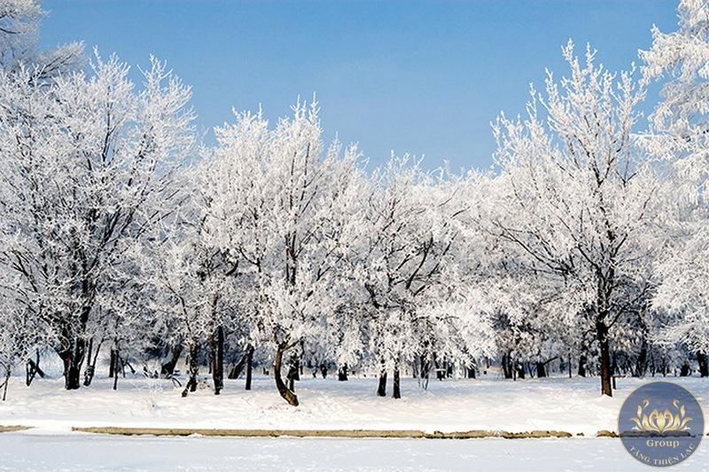 Tranh3D cây tuyết sơn cho gia chủ sức mạnh kiên cường vượt qua khó khăn