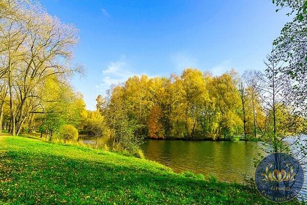 tranh cây lá vàng