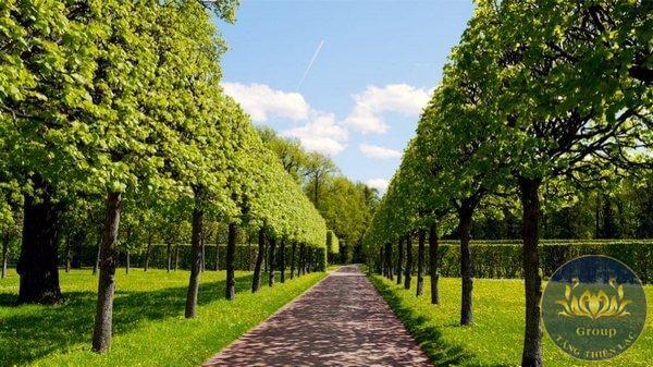 Tranh hàng cây màu xanh rất hợp với gia chủ mệnh Mộc
