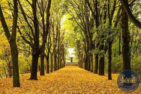 Tranh dán tường 3D hàng cây lá vàng